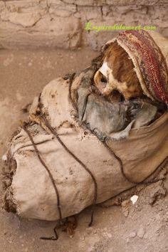 The Mysterious Red Haired Mummies Of The Coast Of Peru - A Report by Brien Foerster  Read more: http://www.messagetoeagle.com/redhairedmummiesperu.php#ixzz30UhTl4pN