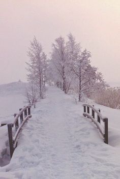 Winter snow ~ Dreamy Nature