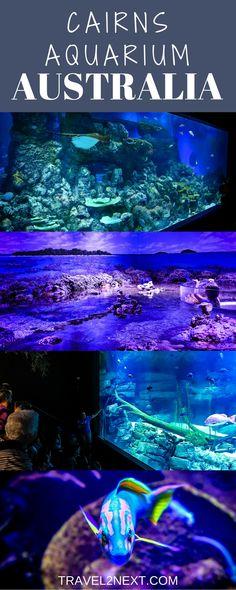 Cairns Aquarium – From Rainforest To Reef. in Queensland, Australia.