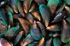 Fresh mussels ...  backgrounds, close-up, food, freshness, mussel, raw, raw food, seafood