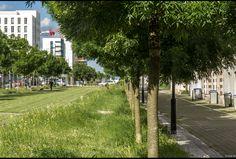 http://www.caue-observatoire.fr/ouvrage/mail-picasso-promenade-du-quartier-pre-gauchet/