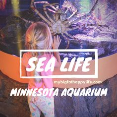 6 Things You Must See at SEA LIFE Minnesota Aquarium (sponsored) - My Big Fat Happy Life