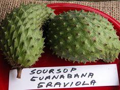 Guanabanas or Anonas--- Exotic fruits of Nicaragua