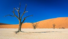 11 of the most beautiful deserts in the world ➤ http://matadornetwork.com/trips/11-beautiful-deserts-world/