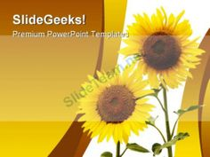 Sunflowers Beauty Nature PowerPoint Template 1110  #PowerPoint #Templates #Themes #Background