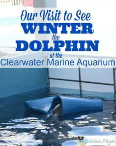 Winter the Dolphin at the Clearwater Marine Aquarium - vacationmaybe.com