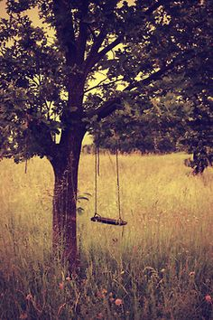 When hubby and I were Inn Keepers at Listening Heart Farm Bed and Breakfast (Healing Retreat), one of the spaces he created for our guests had swings hanging on a tree, overlooking the Meadow. Another Fond Memory.