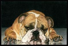 """""""Gulliver""""  Bulldog  Colored Pencil  13.5"""" X 9""""  © Gemma Gylling"""