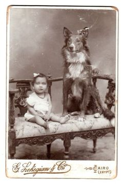 Vintage photo, dog and girl on bench, Egypt Antique Photos, Vintage Photographs, Vintage Photos, Baby Dogs, Dogs And Puppies, Scotch Collie, English Shepherd, Selective Breeding, Pet Photos