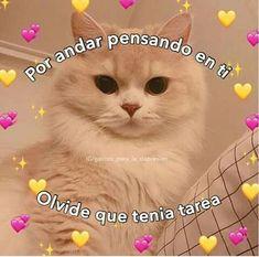 Cool Desktop Wallpapers, Funny Phone Wallpaper, Funny Face Swap, Romantic Memes, Teen Wolf Memes, Love Phrases, Animal Memes, Cat Memes, Love You