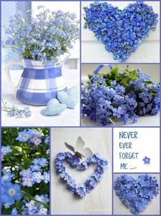 Forget Me Not Cottage Forget Me Not Blue, Love Blue, Beautiful Collage, Beautiful Flowers, Mood Colors, Colours, Collages, Color Collage, Photo Images