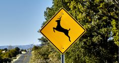 Please Move Deer Crossing Signs Off Interstates So They Cross Somewhere Else