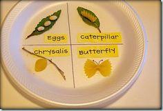 Kindergarten, Butterflies, And The Ipad!