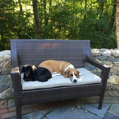 Jessie and Fenway: Happily adopted!