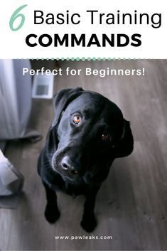 6 basic dog training commands that will help you to train the perfect pup in the first few weeks. I have put together 6 basic dog training commands + some advanced obedience commands that will help you to train the perfect dog. Basic Dog Training, Puppy Training Tips, Potty Training, Training Pads, Training Videos, Training Collar, Crate Training, Toilet Training, Agility Training