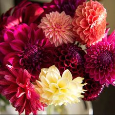 Dahlia's 🌸 I See It, Iphone 5s, Rose, Flowers, Plants, Pink, Roses, Florals, Plant