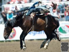 Harry Vold Rodeo Company | ... Rodeo - Bareback Stock - Danged If You Do of Corey & Lange Rodeo