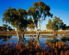 Aussie deserts: Our outback scenes - Australian Geographic..coolibahs, Sturt Creek Tanami Desert