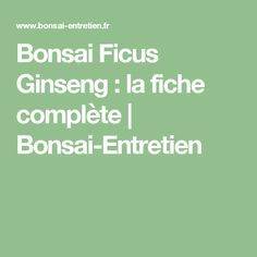 Bonsai Ficus Ginseng : la fiche complète | Bonsai-Entretien