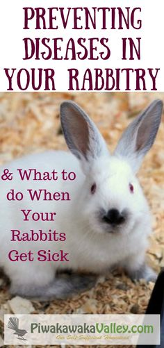 If you keep animals, eventually one of them will get sick. Let me show you how to prevent rabbit diseases and how to control rabbit illness if you get it in your rabbitry.I can show you how to deal with a sick rabbit to prevent other animals getting sick.