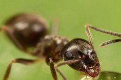 Să analizăm metodele naturale, care vă ajută să eliminați pentru mult timp furnicile din grădină. Fără îndoială, aceste soluții au multe avantaje. Deși nu au un efect imediat ca substanțele chimice, ele pot îndepărta insectele dăunătoare fără să aducă daune plantelor. După cum știți, una din cauzele principale ale apariției furnicilor sunt afidele. Iată de ce, e nevoie să întreprindeți măsuri de combatere a afidelor de îndată ce observați apariția acestora. Astfel, puteți proteja copacii de… Home And Garden, Cabana, Cottages, Gardening, Garden, Farmer, Culture, Insects, Plant
