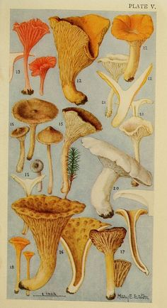 Field Mushrooms by BioDivLibrary