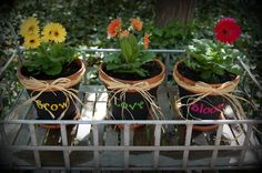 I love gerbera daisy for flower pots!  Don't over water and the will bloom all summer
