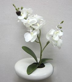 Home Inspirations- Mini Phalaenopsis Orchid in White Ceramic Pot & Home Inspirations at Joann.com