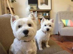If you asked these two girls if they'd had breakfast they'd say no... Luckily we know better.  www.facebook.com/PepperTheWestie