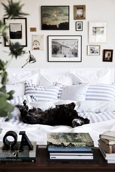 dogs on furniture, gallery wall, white sofa, comfy nook, black and white photography, eclectic style