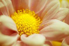 Flower Macro by Ana Pontes