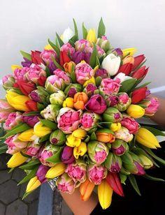 Cand vrei sa surprinzi cu adevarat pe cineva care iubeste lalelele, cu siguranta vei reusi cu un buchet format din 101 lalele.  #tulips #spring #gift #surprise #impressive #gorgeous #flowers #bouquet Beautiful Bouquets, Floral Wreath, Bloom, Gardens, Wreaths, Flowers, Plants, Decor, Impressionism