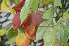 Danielafoto / Jeseň Plant Leaves, Plants, Handmade, Plant, Hand Made, Planting, Planets, Handarbeit