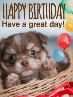 Adorable Puppy Birthday Card Happy Images Quotes