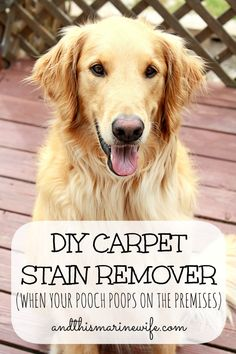 DIY Carpet Stain Remover (When Your Pooch Poops On The Premises)