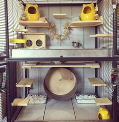 Chinchilla Cage Set-up By Candice Ins: my degus would love this! Chinchillas, Hamsters, Pet Rats, Gerbil, Rodents, Cage Chinchilla, Ferret Cage, Hamster Cages, Diy Chinchilla Toys