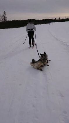 Have a nice day with Wag Pets🐾 - Lustige Tiere - Humor Funny Cute Puppies, Cute Dogs, Dogs And Puppies, Awesome Dogs, Cute Funny Animals, Funny Dogs, Funny Ski, Animals And Pets, Baby Animals