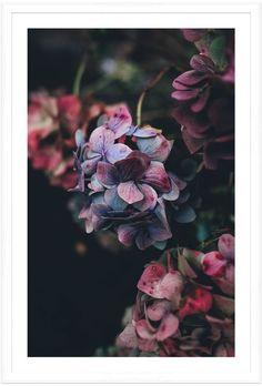 Soicher Marin Flowers B (Framed)