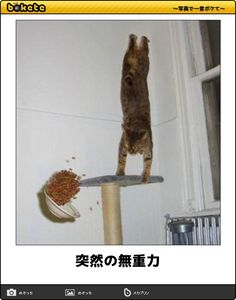 オフ日のキティちゃんってこんな顔!?悩みを吹っ飛ばす猫の傑作ボケて15選 - Spotlight (スポットライト)