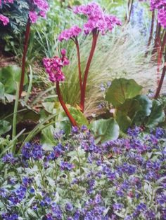 Bergenia and pulmonary and camellia are good plants for north facing plots.