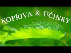 Kopřiva - léčebné účinky (kopřivový čaj a jeho účinky) - Zdraví z přírody - YouTube Plant Leaves, Herbs, Youtube, Plants, Herb, Plant, Youtubers, Youtube Movies, Planets