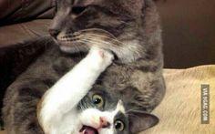Save me, human. (via oowot.com)