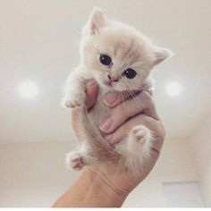 Cute Cats And Kittens Doing Funny Things Cute Kittens Names Kittens Cutest Baby, Cute Baby Cats, Cute Cat Gif, Cute Little Animals, Cute Cats And Kittens, Cute Funny Animals, I Love Cats, Fluffy Kittens, Cute Baby Kittens