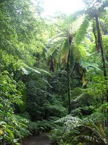Kinsakubaru Virgin Forest, Amami Oshima, Japan where I call home...