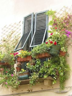 Flower balcony in Lucca, Tuscany, Italy