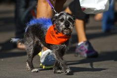 A participant in Best Friends Animal Society's annual Strut Your Mutt event in Salt Lake City on Sept. 22. (Chris Detrick  |  The Salt Lake Tribune)
