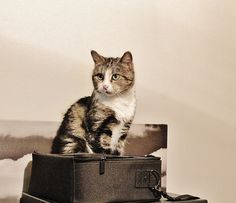 Tiksu The Cat