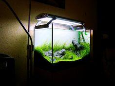 https://flic.kr/p/9YwkvV | Green Paradise Side | Planted aquaium