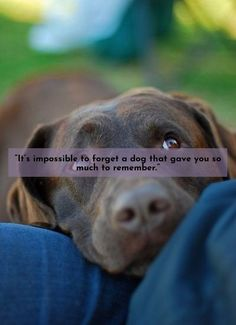 """""""Dogs are how people would be if the important stuff is all that mattered to us."""" – Ashly Lorenzana #lovelabs #labrador"""