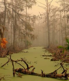 "Voodoo - Manchac Swamp, Louisiana Located in the U. state of Louisiana, near the city of New Orleans, is also known as ""swamp of the ghosts"". In the belief that this move surrounding swamp was cursed by a sinister adept senior voodoo cult, in the early Louisiana Swamp, Louisiana Homes, New Orleans Louisiana, New Orleans Voodoo, Acadie, All Nature, Slytherin, Monuments, Places To See"